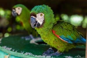 Aviario National Park Private Tour