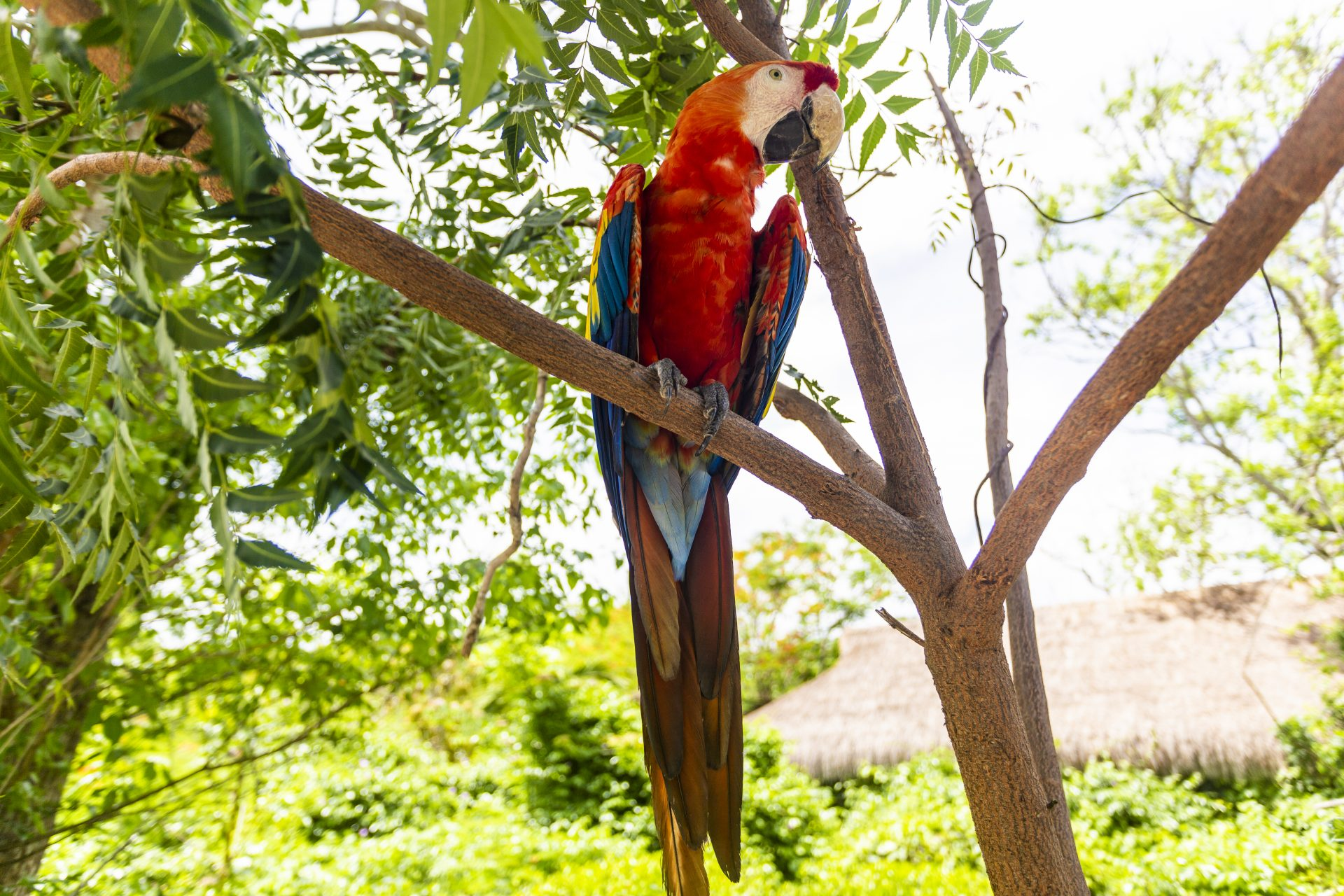 Aviario National Park Private Tour