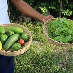 Fundation Green Apple